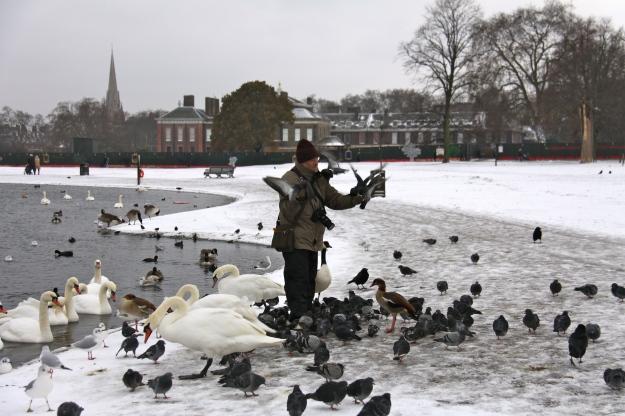Londres - HYDE PARK nevat - al fons Kensington Palace