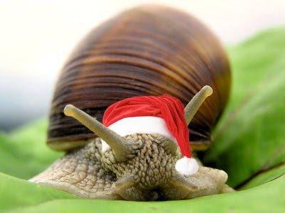 cargol Nadal