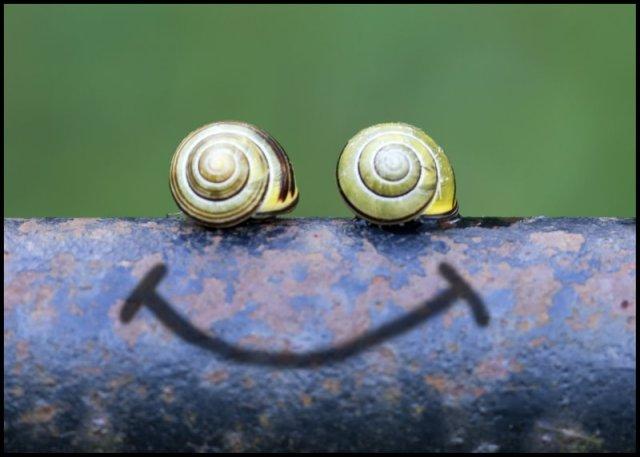 Smiley_cargols