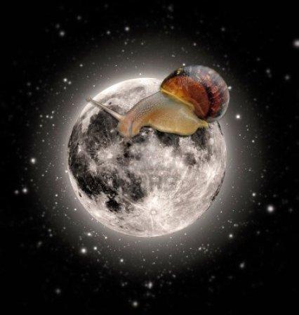 Cargol lluna