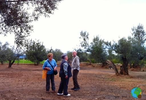 Tortosa  - Sant Francesc-imp