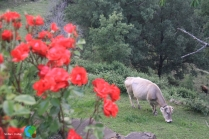 Pirineu d'Osca - 21-06-2103 300-imp
