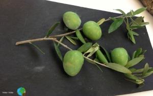 Olives gelades