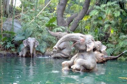 Elefant content 15