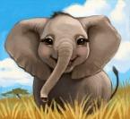 Elefant content 2