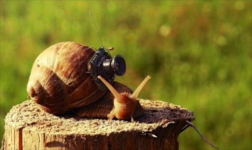 Cargol Fotograf
