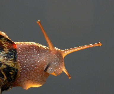 cargol-treu-banya