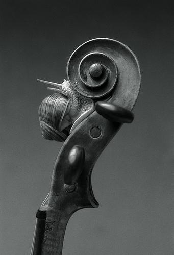 Cargol amb violi