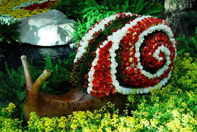 Cargol de Roses