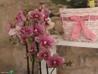 Girona - Temps de Flors 2014 k1-imp