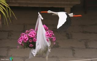 Girona - Temps de Flors 2014 y1-imp