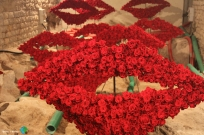 Girona - Temps de Flors 2014 zze3-imp