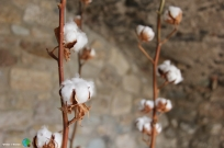 Girona - Temps de Flors 2014 zzs1-imp