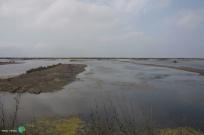 Delta del Ebre - 07 juny 2014 a2-imp