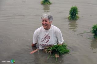 Plantada de l'arros - Poble Nou del Delta - 08 juny 2014 b1-imp