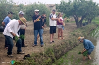 Plantada de l'arros - Poble Nou del Delta - 08 juny 2014 c1-imp