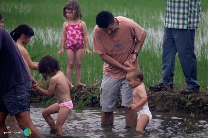 Plantada de l'arros - Poble Nou del Delta - 08 juny 2014 f1-imp