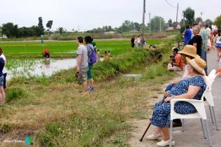 Plantada de l'arros - Poble Nou del Delta - 08 juny 2014 j2-imp