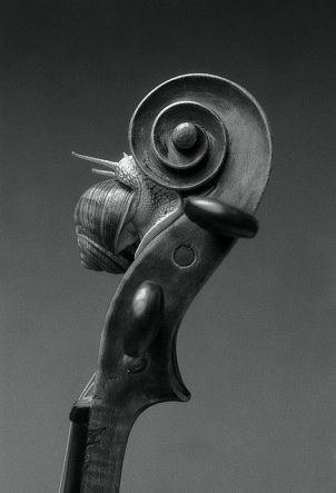 cello i cargol