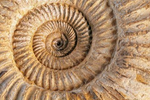 Cargol prehistoric