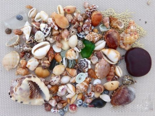 shells and beach bling of the caribbean islands