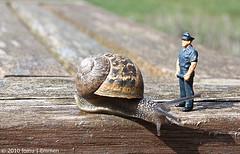 Cargol i policia