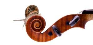 Cargol i violi