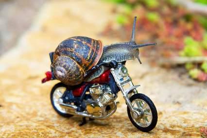 Cargol amb la seva moto