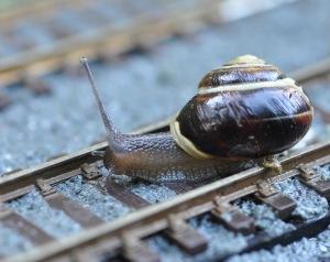 Cargol al tren