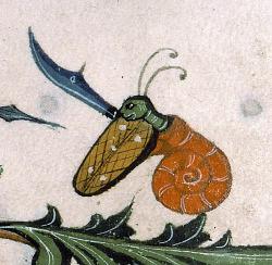 Cargol del segle XVI