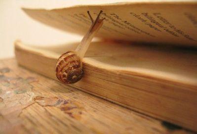Cargol a la Biblioteca