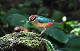 ocell i cargol