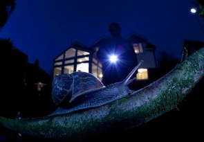 Cargol a la nit