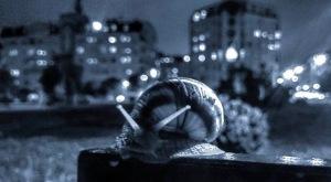 cargol-en-la-nit-de-la-ciutat-1