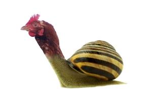 pollastre-cargol