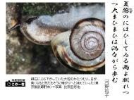 cargol japones 12