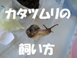 cargol japones 14
