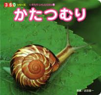 cargol japones 16